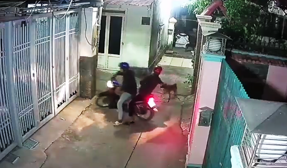 Owner held at gunpoint after dog thieves taser his pet in Saigon