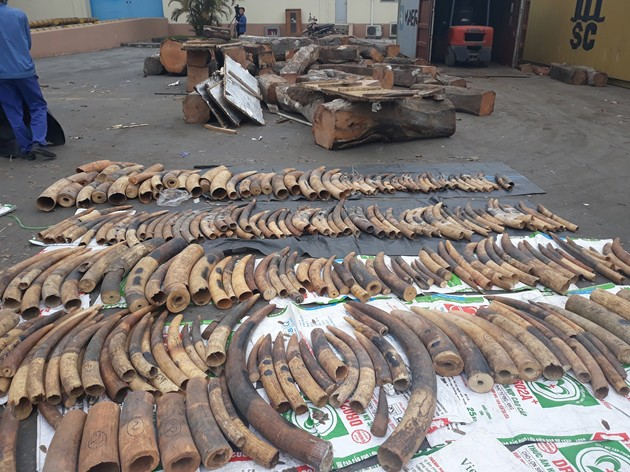 Vietnam customs seizes tons of elephant tusks, pangolin scales in container