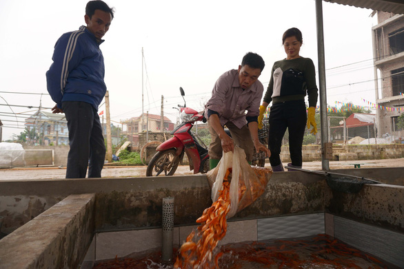 A farmer pours his carp into a tank to get them ready for buyers. Photo: Chi Tue / Tuoi Tre