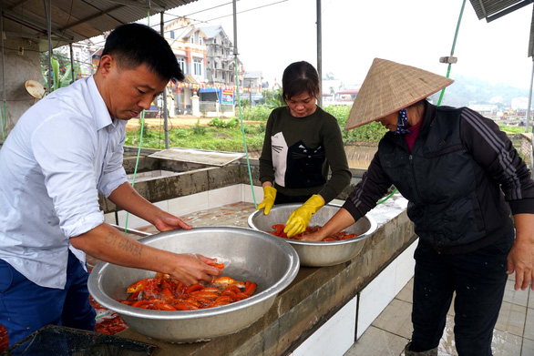 Residents classify the carp before selling them. Photo: Chi Tue / Tuoi Tre