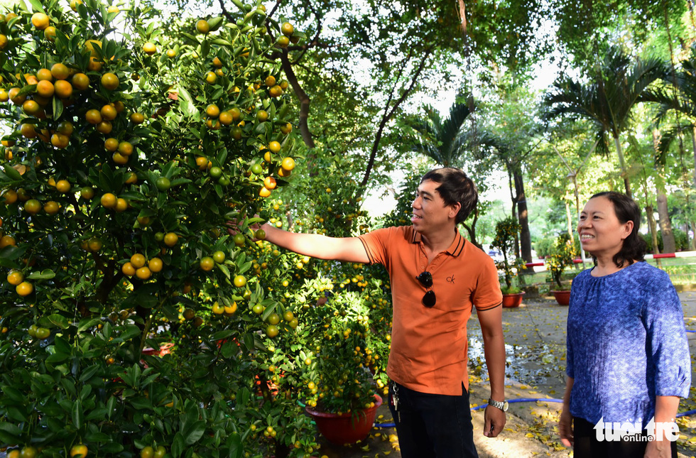 A man and his mother choose a kumquat at Hoang Van Thu Park in Ho Chi Minh City, January 2019. Photo: Duyen Phan / Tuoi Tre