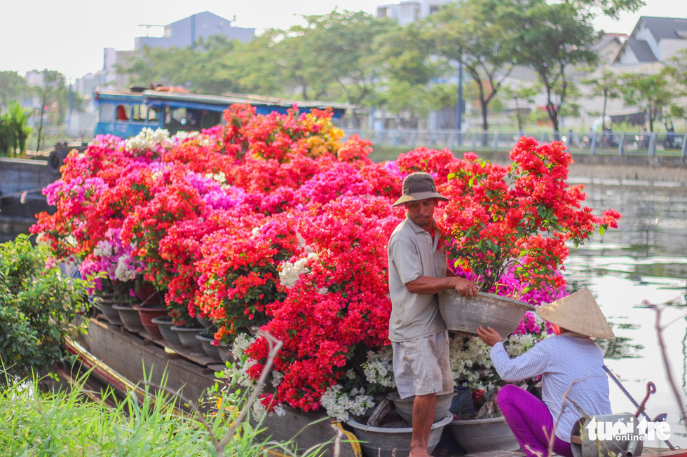Ornamental plants flood into Ho Chi Minh City in lead-up to Tet