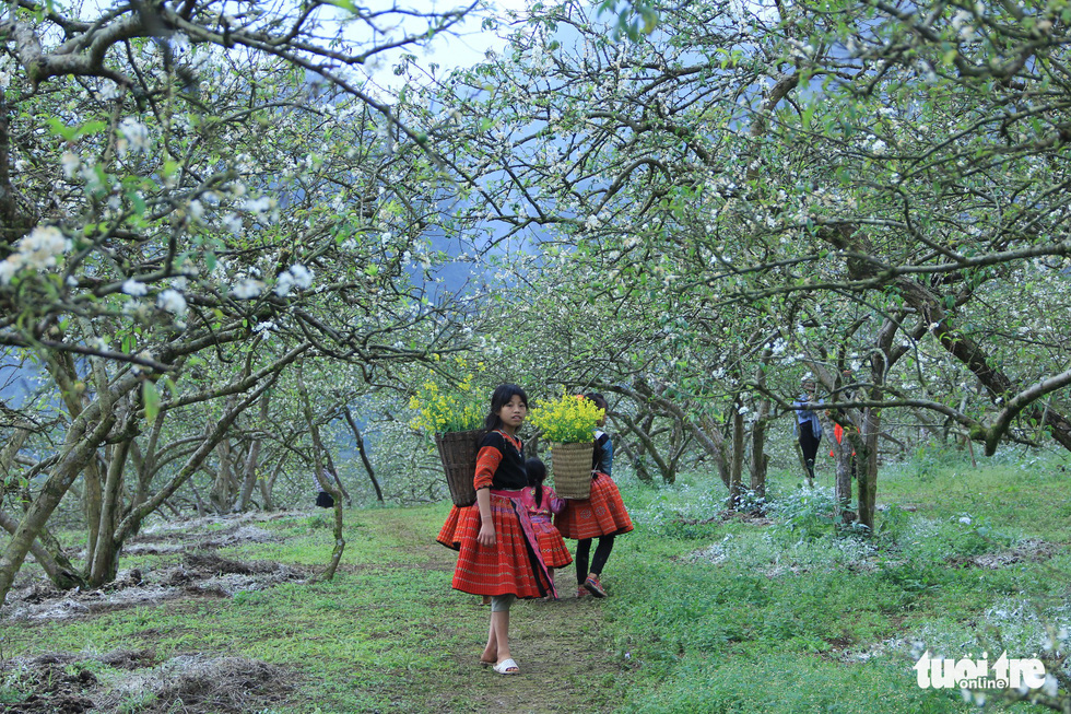 Local children spend their free time on taking a stroll among the plum trees. Photo: Tuoi Tre
