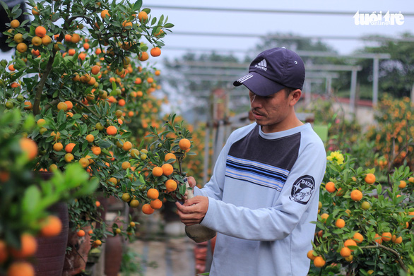 Vietnamese man grows kumquat bonsai trees in glass bottles