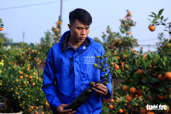 A customer inspects a kumquat bonsai tree grown inside a glass bottle. Photo: Nguyen Hien / Tuoi Tre