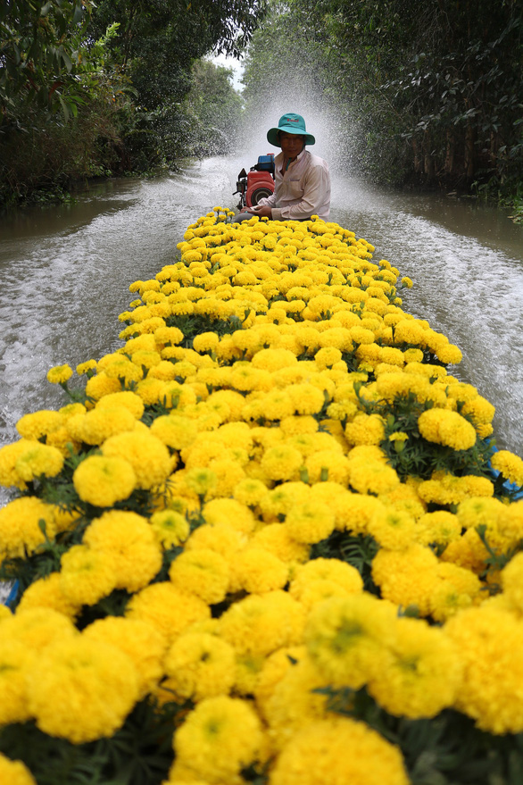 A flower seller steers his boat toward the market. Photo: Nguyet Nhi / Tuoi Tre