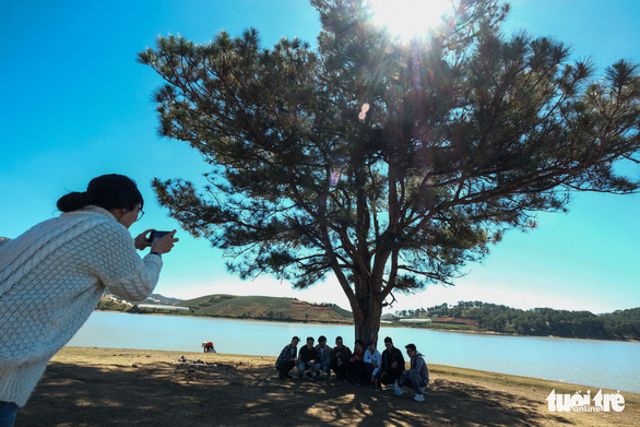 Visitors angered as it's no longer free to admire Da Lat's 'Lonely Pine Tree'