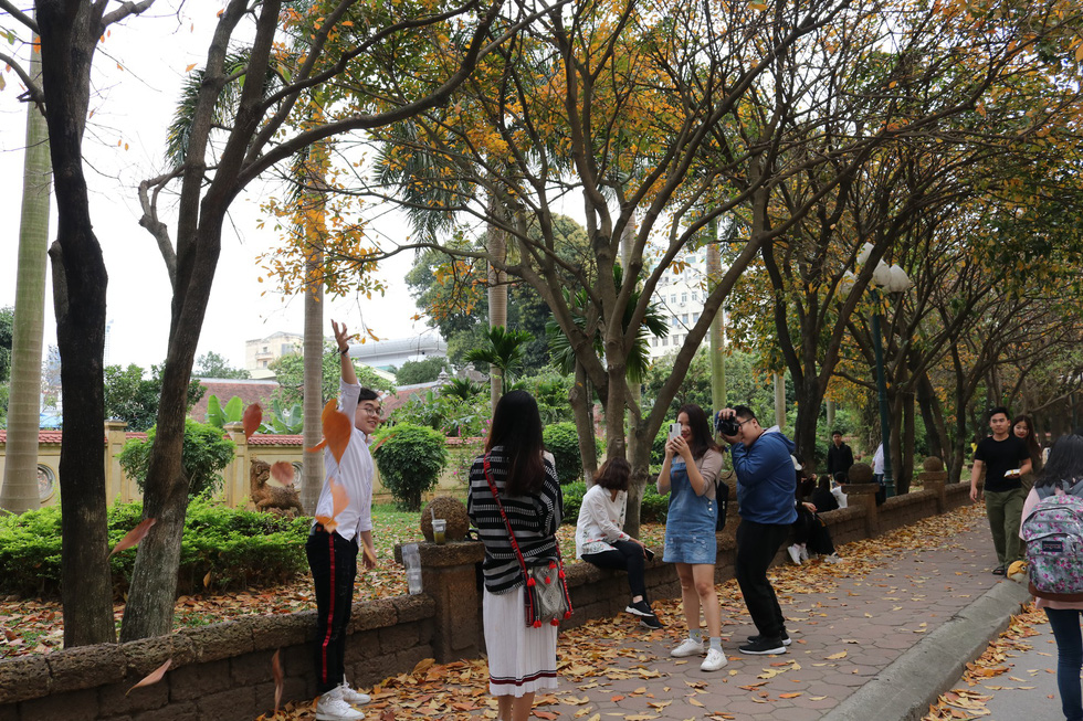 Young people take photos with the trees and their leaves. Photo: Duong Lieu / Tuoi Tre