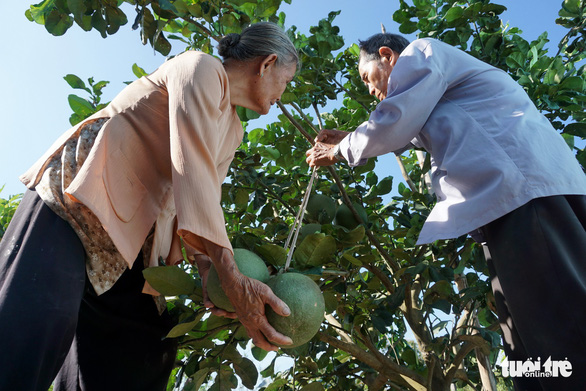 The farm yields prove plentiful for the couple. Photo: Tuyet Kieu / Tuoi Tre