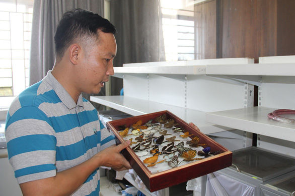 Phan Quoc Toan shows insect specimens in his office at Duy Tan University in Da Nang, central Vietnam. Photo: Ha Chau / Tuoi Tre