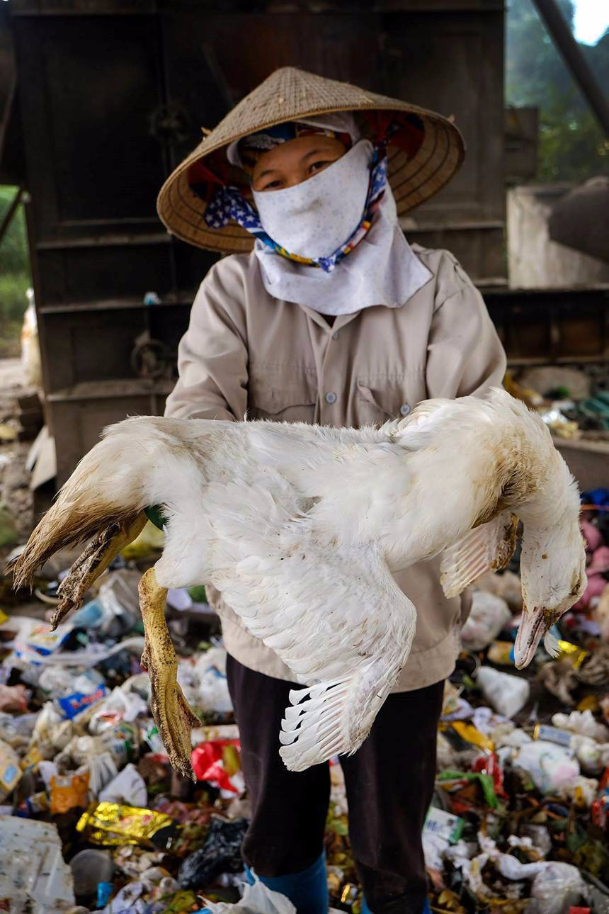 A resident shows a dead duck that is dumped by local people.