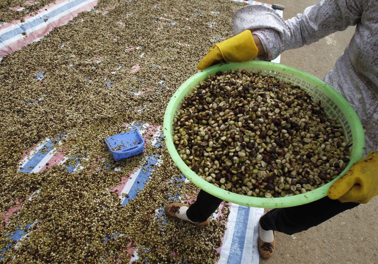 Vietnam's 2018/2019 coffee output to fall sharply: industry body