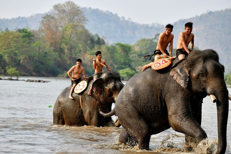 Fast and furious: Vietnam's elephant race draws cheers, and critics