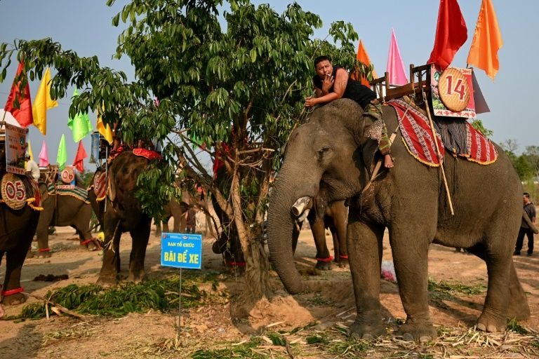 A mahout smokes a cigarette while sitting atop his elephant before the race during the Buon Don festival. Photo: AFP