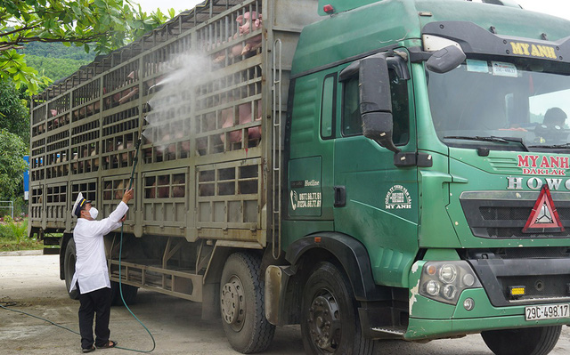 A truck carrying pork is sterilized in the central city of Da Nang. Photo: Bui Toan / Tuoi Tre