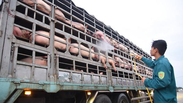 African swine fever threatens Vietnam's $10bn pork market