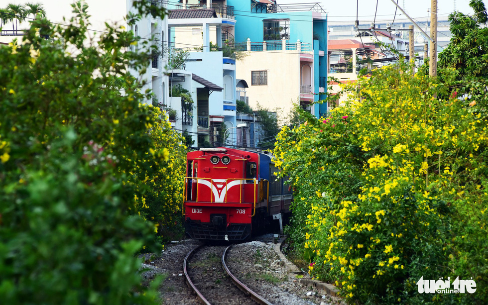 Yellow bells brighten up railroad neighborhoods in Ho Chi Minh City