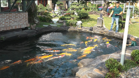 Keeping Koi fish a trendy hobby among affluent Saigonese