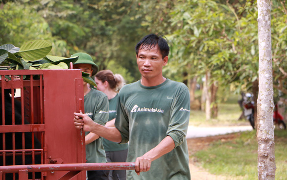 Dao Anh Tuan moves a bear at Vietnam Bear Rescue Center in Vinh Phuc Province, northern Vietnam. Photo: Thuy Trinh / Tuoi Tre