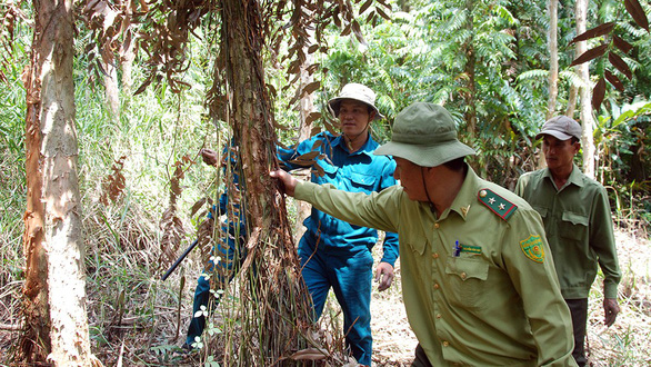 Officers are on duty to prevent forest fire at U Minh Ha National Park in the Mekong Delta province of Ca Mau. Photo: N.Hung / Tuoi Tre