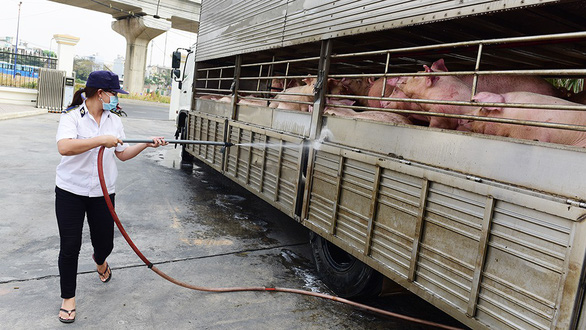 A animal health warranty officer sprays disinfectant at a truck transporting live pigs into Ho Chi Minh City. Photo: Quang Dinh / Tuoi Tre