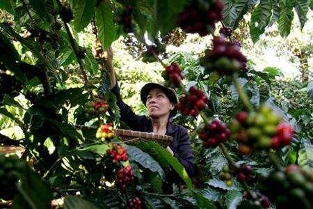 Vietnam March coffee exports seen falling; muted activity in Indonesia