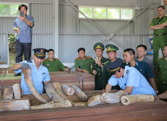 Customs officials examine tusks taken from a ship container in Da Nang, central Vietnam, March 26, 2019. Photo: H.Q. / Tuoi Tre
