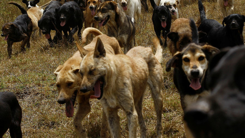 Child, 7, dies after being mauled by pack of dogs in Vietnam