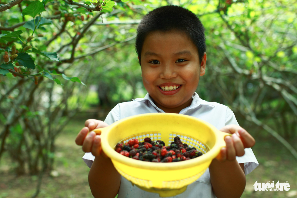 Le Van Chinh's son holds a basket of freshly-picked mulberries in excitement. Photo: Tan Luc / Tuoi Tre