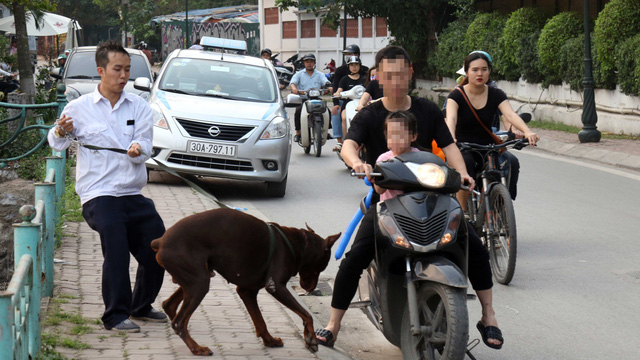 Only 39 percent of pet dogs in Vietnam vaccinated: authority