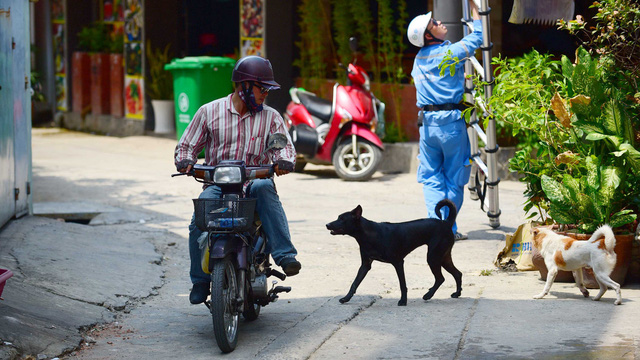 A dog roams freely without a leash or muzzle in Ho Chi Minh City. Photo: Quang Dinh / Tuoi Tre