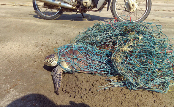 Rangers at Vietnam nature reserve save turtle stuck in fishing nets
