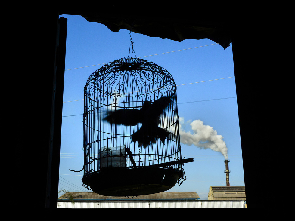 The third runner-up photo of a bird trying to survive in the polluted environment by Tran Van Tuy.