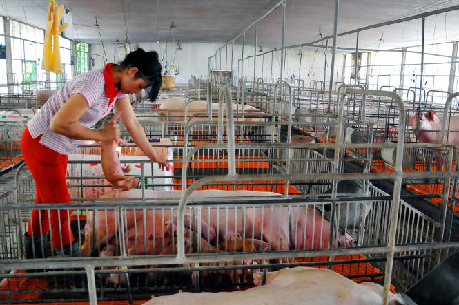 China's top feed producer New Hope builds three pig farms in Vietnam