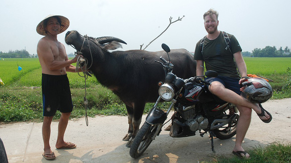 Cash cows: Hoi An farmers train buffalo as 'models' to rake in extra money