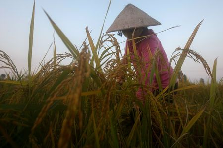 Vietnam rice rates gain on fears Mekong water woes may hurt crops