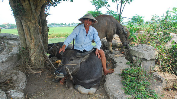 A farmer poses with his pet buffalo in Hoi An, central Vietnam. Photo: T.B.D / Tuoi Tre