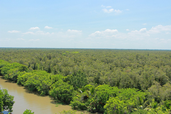 A bird's eye view of the forest in Lung Ngoc Hoang Nature Reserve in Mekong Delta. Photo: Chi Cong / Tuoi Tre