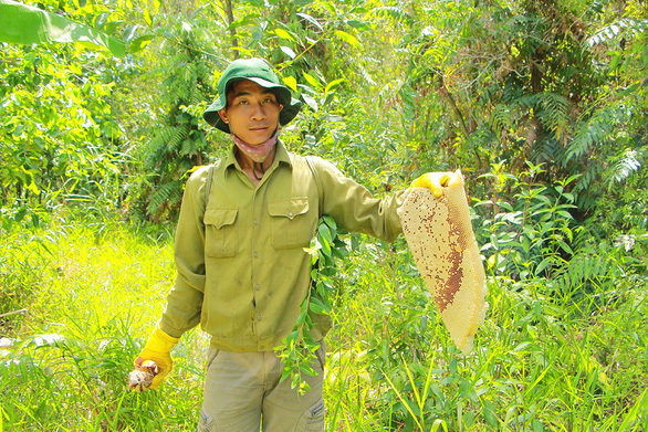 Farmer Nguyen Van Truong holds a forest beehive in Lung Ngoc Hoang Nature Reserve in Mekong Delta. Photo: Chi Cong / Tuoi Tre