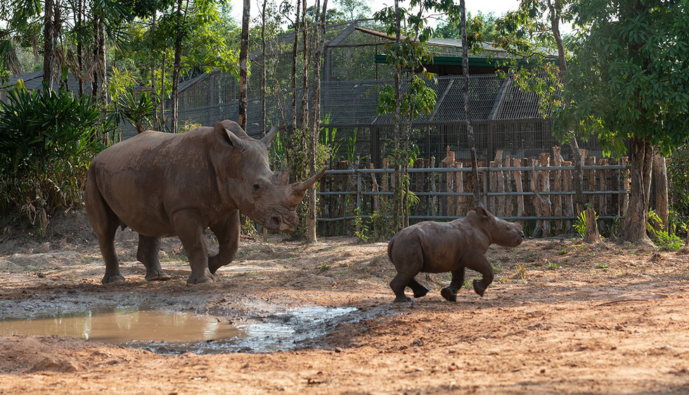 A natural habitat is ideal for wild animals. Photo: Huu Hanh / Tuoi Tre