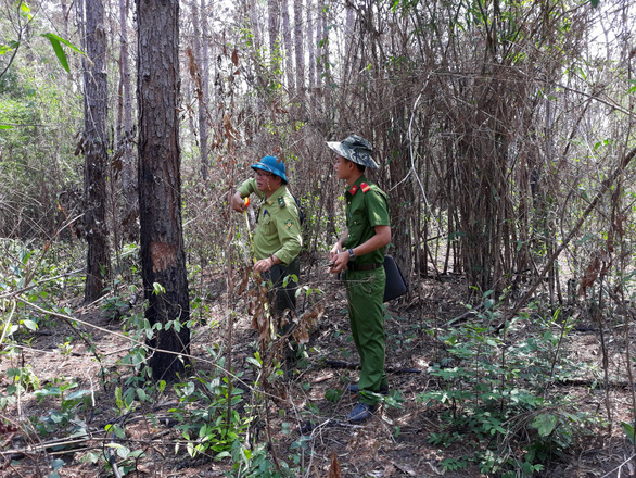 Two men in uniform examine the poisoned trees in Tan Tanh Commune, Lam Ha District, Lam Dong Province on May 4. Photo: Luu Quynh / Tuoi Tre