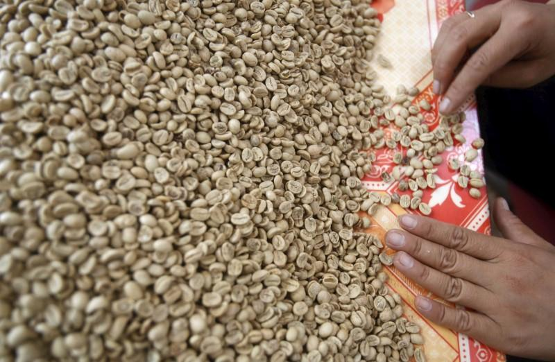 Vietnam domestic coffee prices hit six-year low, Indonesian premiums rise further