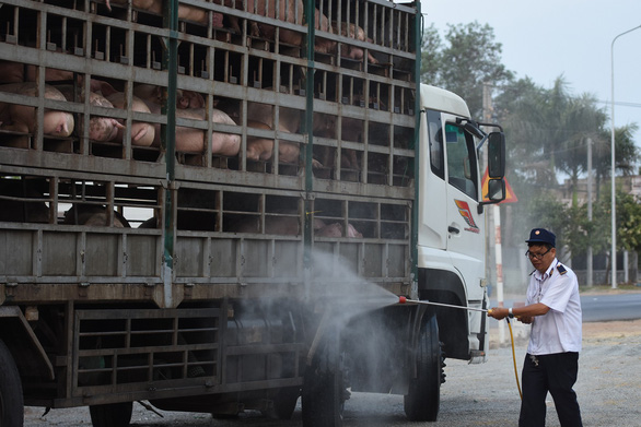 Vietnam culls 1.2 million pigs as African swine fever spreads nationwide