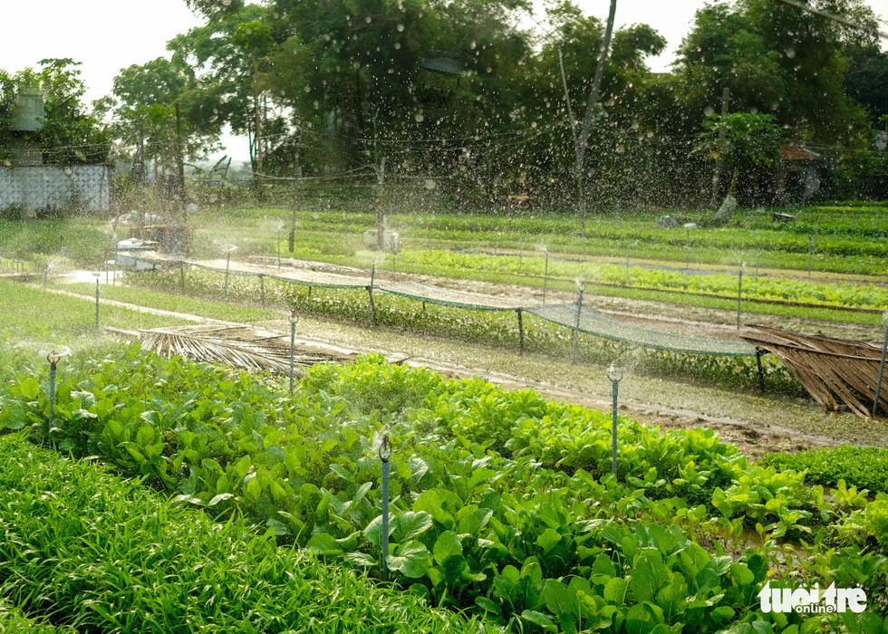 Crops are watered automatically in Tra Que vegetable village in Hoi An, Quang Nam, central Vietnam. Photo: Mai Vinh / Tuoi Tre