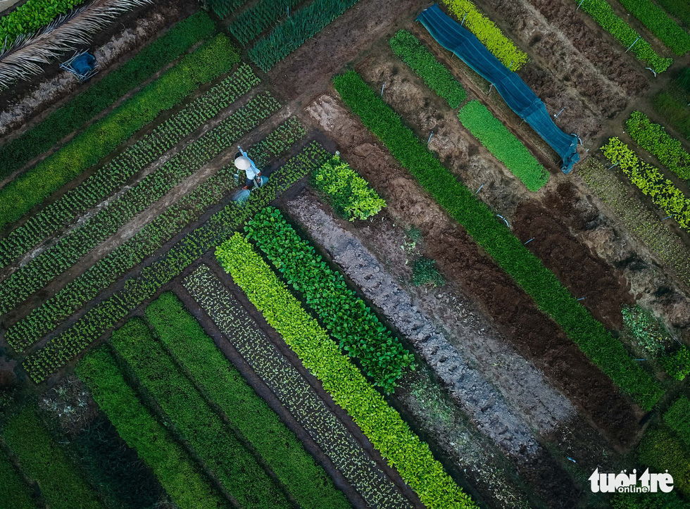An aerial view of Tra Que vegetable village in Hoi An, Quang Nam, central Vietnam. Photo: Mai Vinh / Tuoi Tre