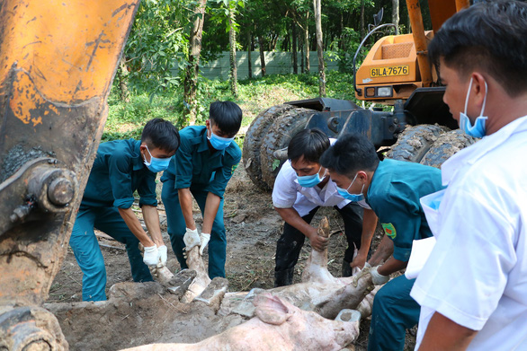 African swine fever spreads to another of Ho Chi Minh City's neighbors