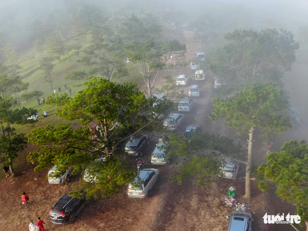 A long line of cars is parked on a path leading up to 'Lovebird Hill' in Lam Dong Province, Vietnam. Photo: Tuoi Tre