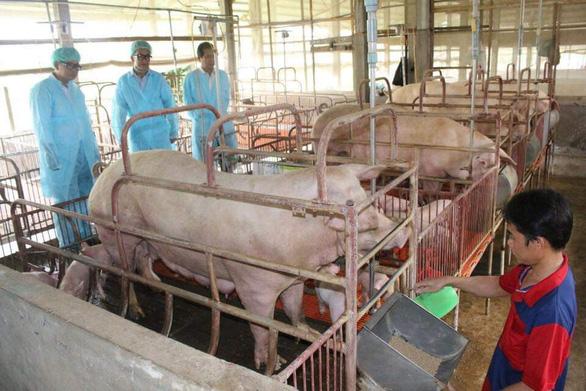 African swine fever hits sixth locality in Vietnam's Mekong Delta