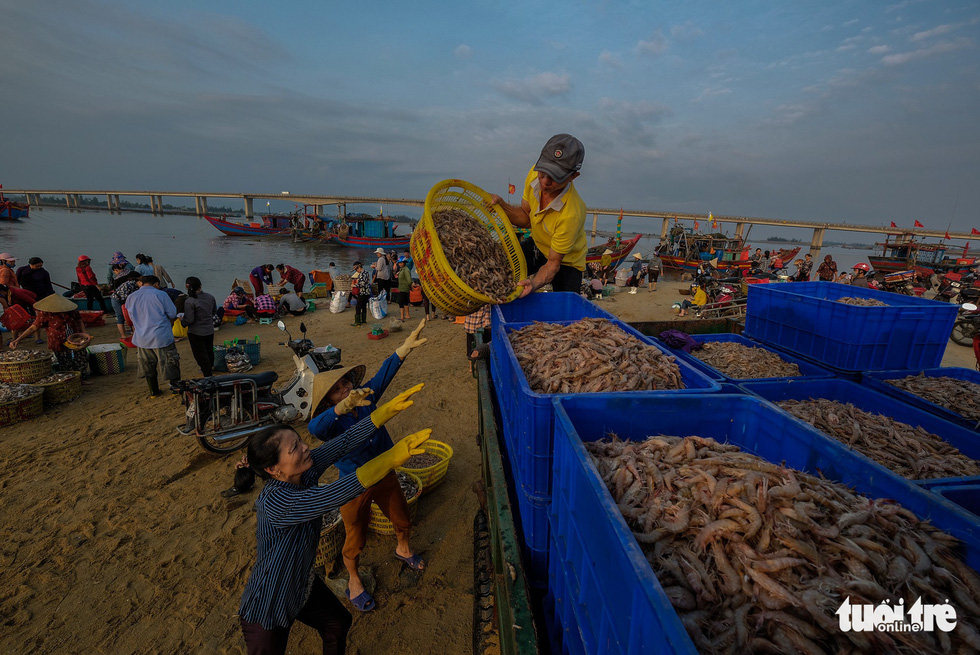 A merchant buys shrimps to resell them at local markets. Photo: Nam Tran / Tuoi Tre