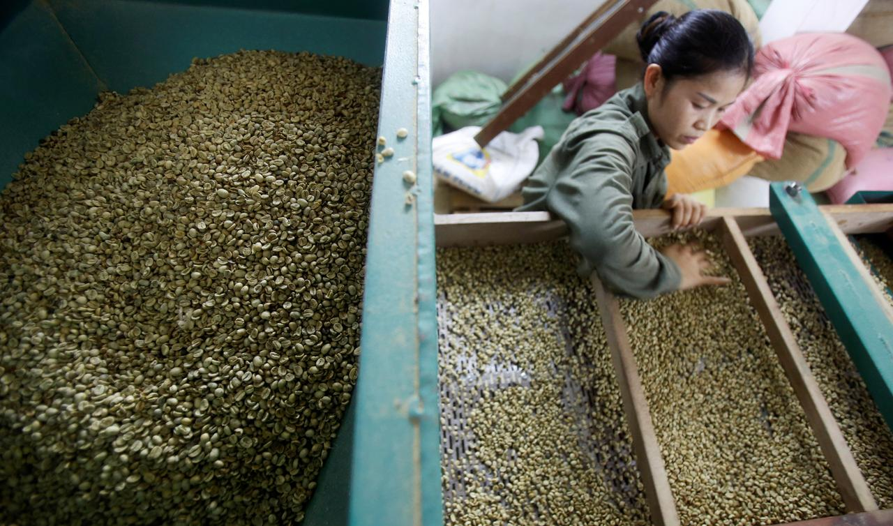 Vietnam's Jan-May coffee exports to fall 13.1% y/y - govt data